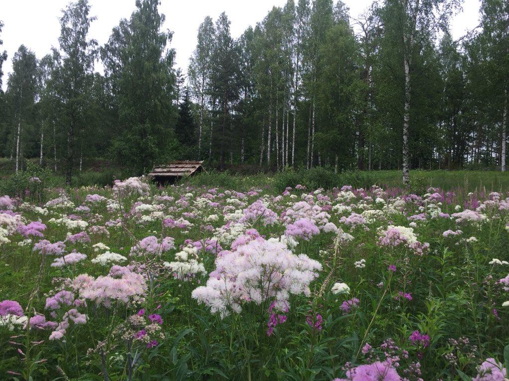 Tähän aikaan vuodesta käyn aina museon niityllä. #Pöljä #museo #lehtoängelmä