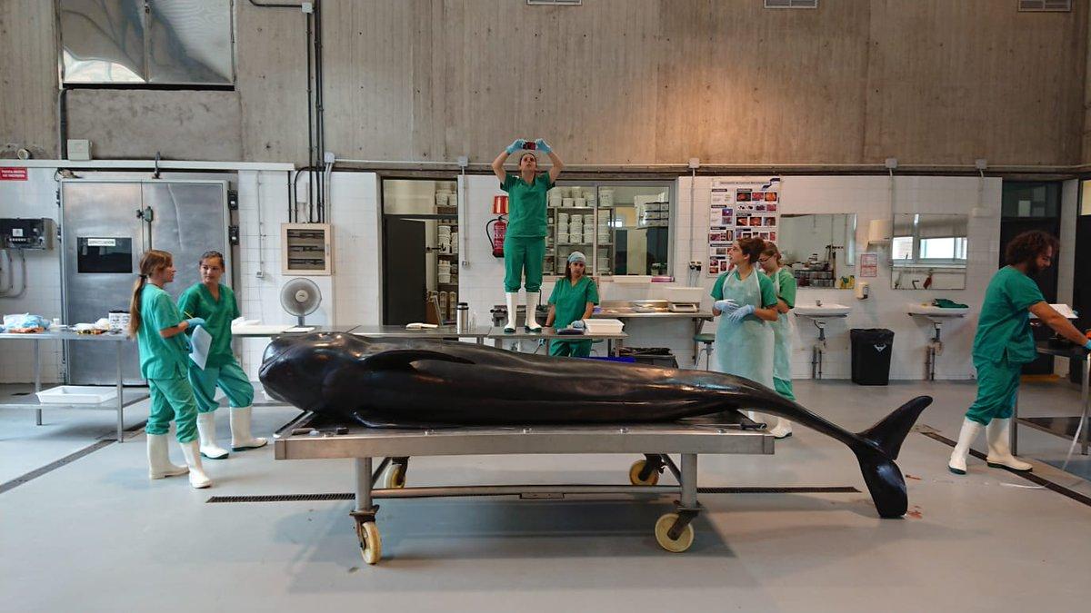 Resultado de imagen de Facultad de Veterinaria de la ULPGC,