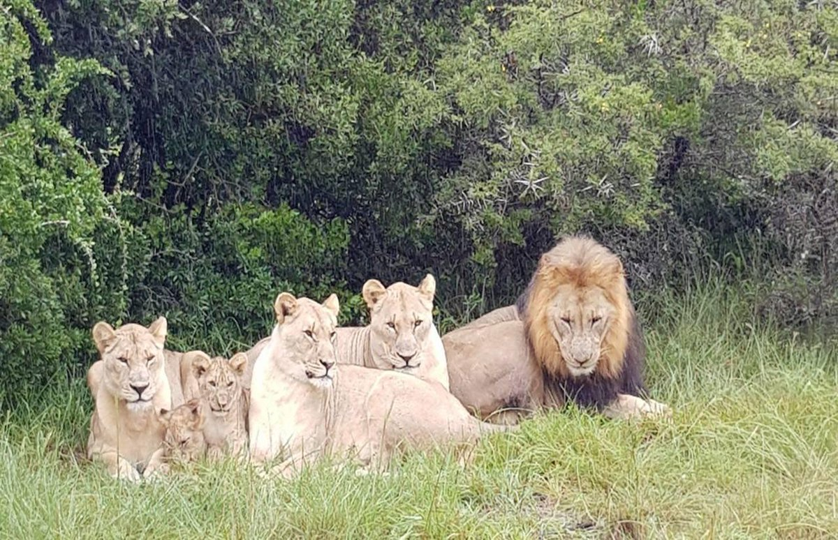 Lions ate three poachers after breaking into South African game reserve to hunt rhinos https://t.co/DokfWOjpla
