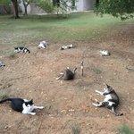 野良猫が集会開いてたw輪っかに寝転んでいるあたりなにか召喚するみたい
