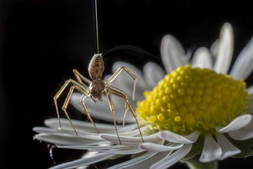 電界に乗るクモ