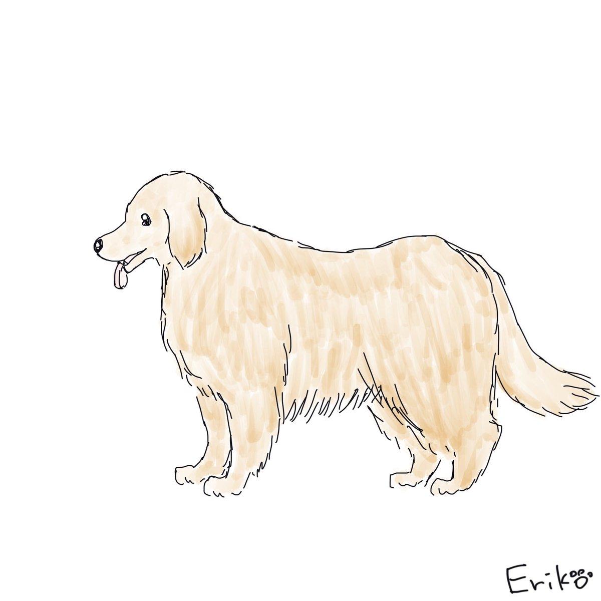 Dog Cat Sketch On Twitter ゴールデンレトリバー ゴールデン