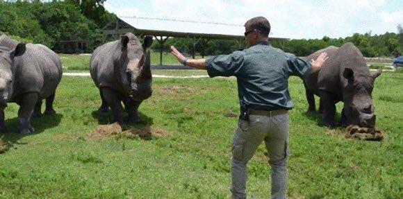 動物園飼育員さんの例のシーンの真似が可愛いw  #ジュラシックワールド