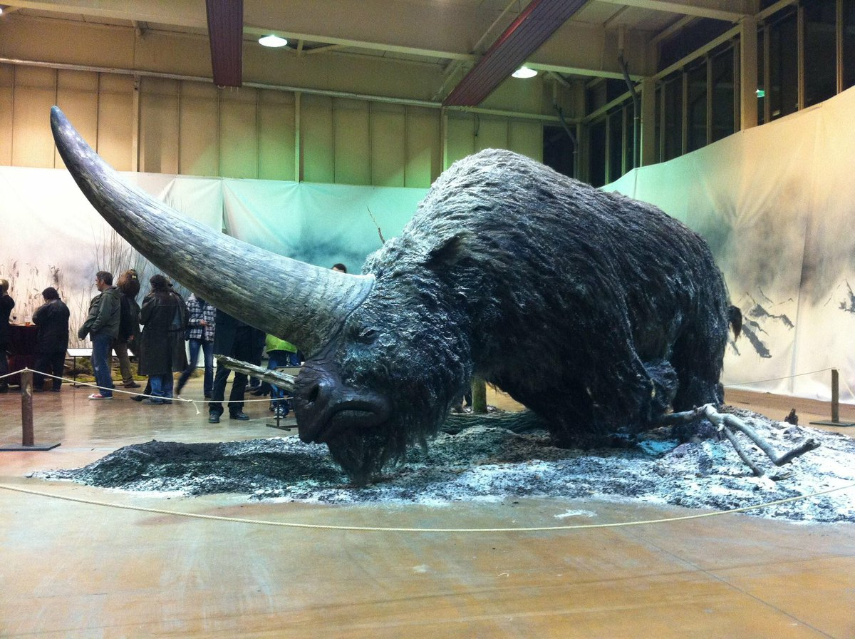 giant animals that actually exist - 1024×765