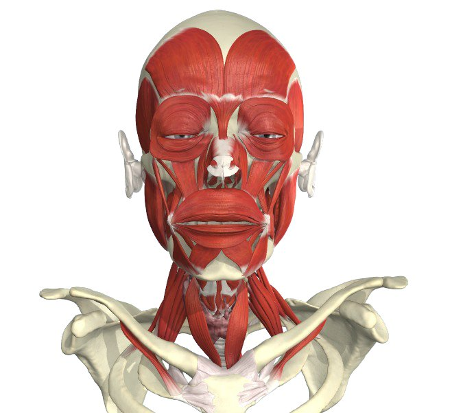 Bir On Twitter Free Access For Bir Members To Anatomytv From