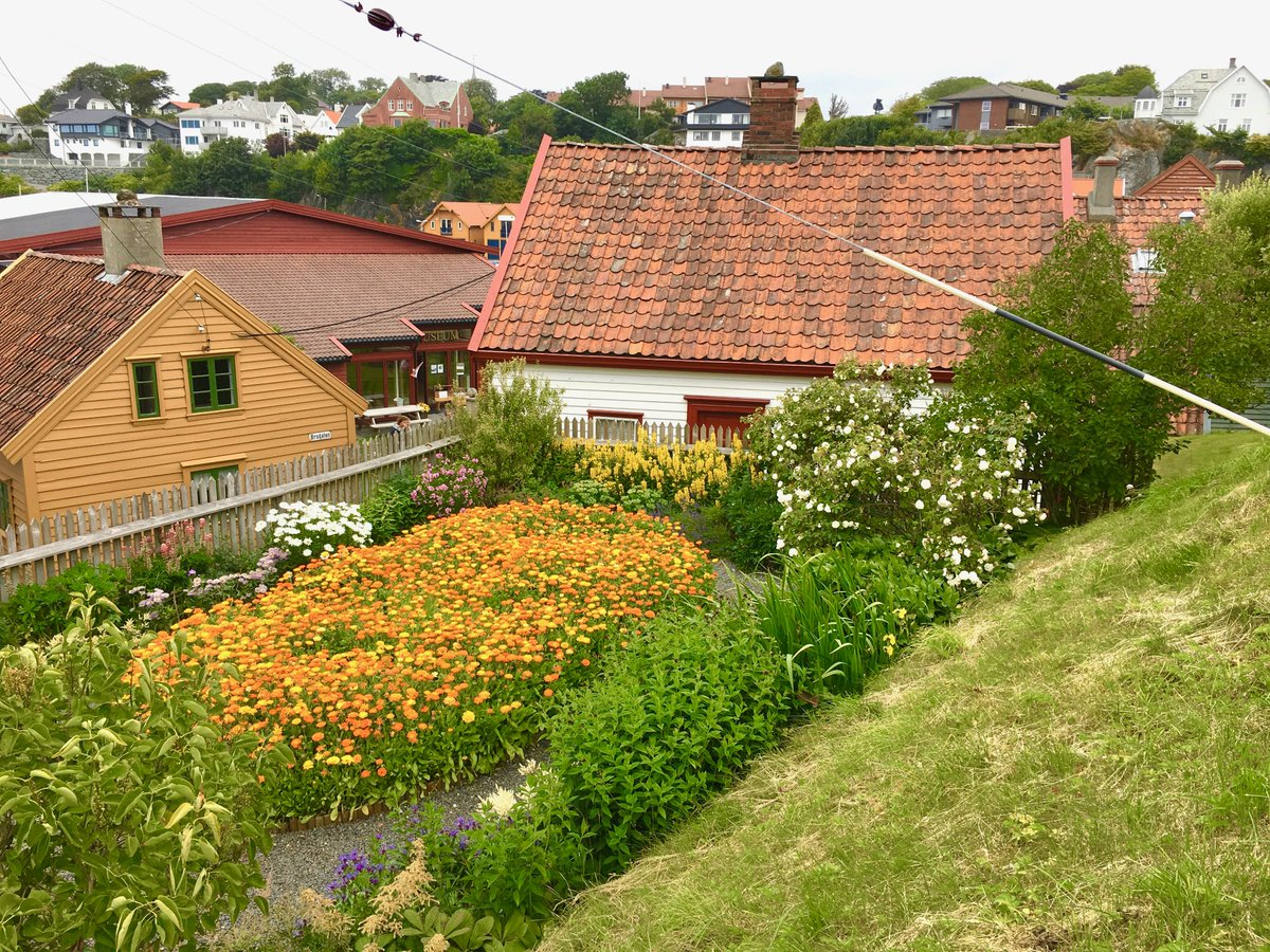 Steve Wickham On Twitter In Norway For Some Shows With Waterboys Here S A Picture Of A Jolly Norwegian Garden