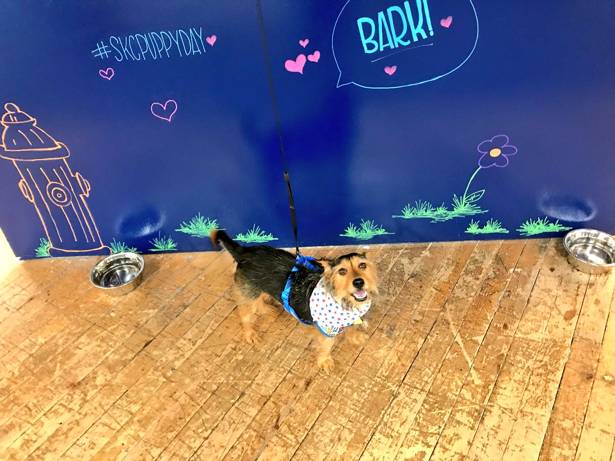 #TakeYourDogToWorkDay Latest News Trends Updates Images - ksglunt