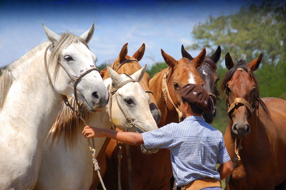 уход за лошадью с картинками