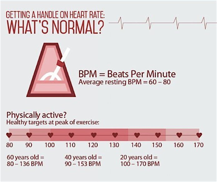 What is a normal adult heart rate