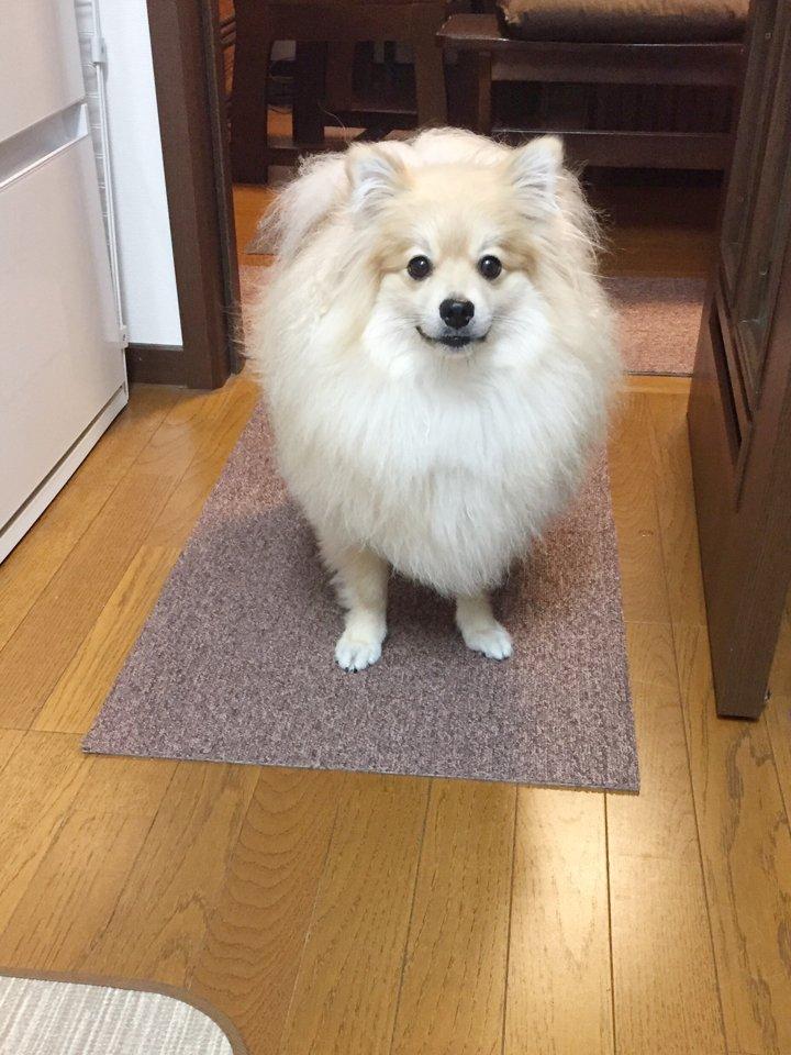 耳がぴょこっと生えてきたww丸い顔から生えてきた犬の耳に可愛さが溢れるww
