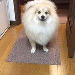 耳がぴょこっと生えてきた丸い顔から生えてきた犬の耳に可愛さが溢れる