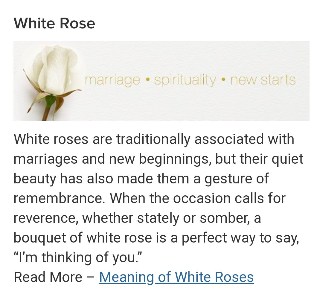 kitsune on twitter ok so white rose means respect and marriage