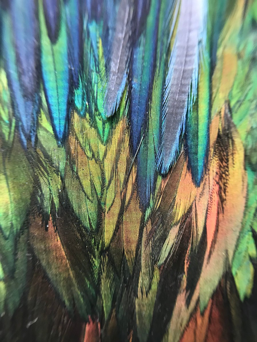 Whos feathers are these? 🤔 (Hint: it may have a well-known name, but you wouldnt consider it a well-known bird.)