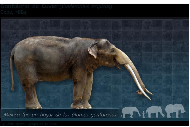Encuentran en Oaxaca restos de gonfoterio, un ancestro prehistórico del elefante �� https://t.co/X5HkvoG55x https://t.co/5RrIYkga7V