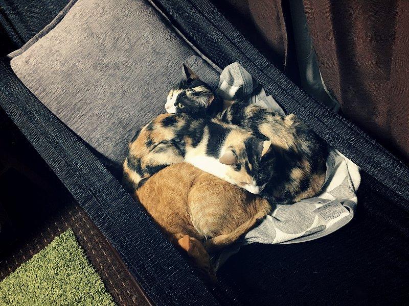 仮眠用にハンモック買ったのですが、横たわった瞬間、猫たちが集合して来て股関節いかれました。そして夜中ふと見たら私がいなくとも自主的にハンモック使って寝てたので、人間は譲るしかないですよね。