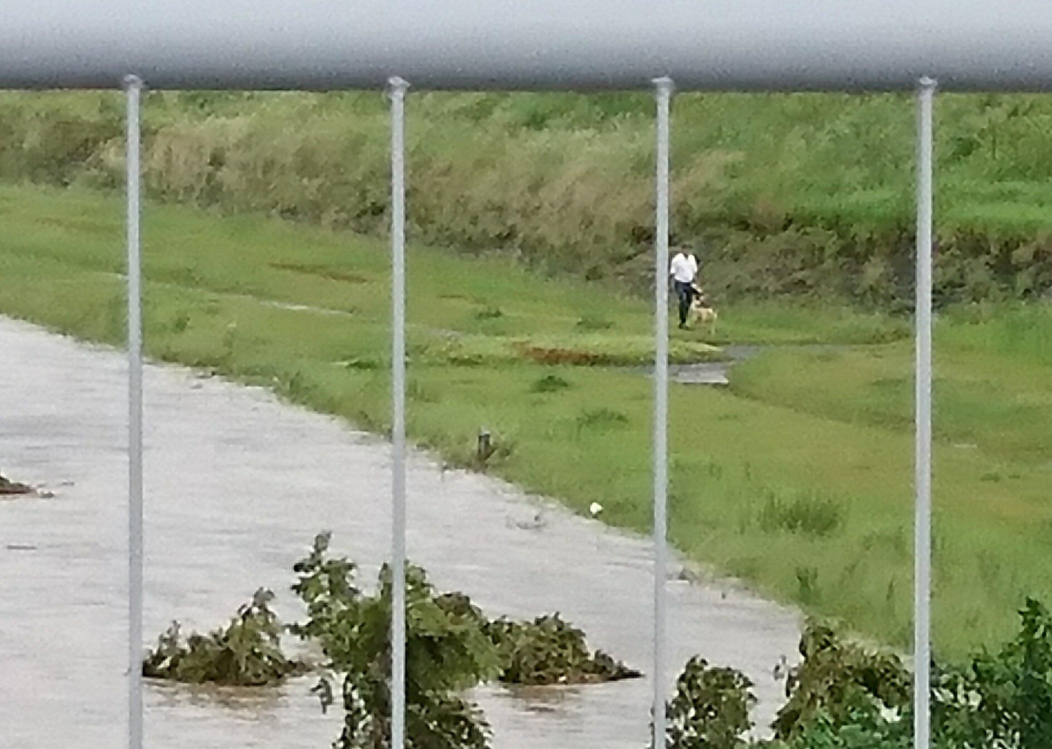 画像,大雨・洪水警報が発令され、長良川がギリギリまで増水してても全く動じない岐阜県民。 https://t.co/GHM9yb3Ywh…