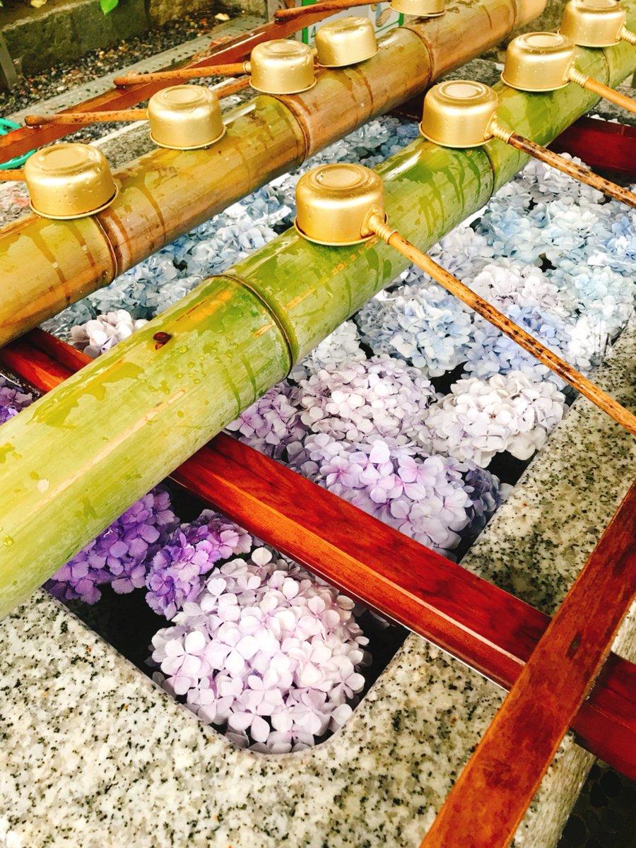 新潟の白山神社で風鈴まつりがやっていたのだけどめちゃくちゃかわいい風鈴があってとても欲しいのだけど…ジンベイザメ、タコ、イカ、カメ、クラゲ…手水場には紫陽花……かわいい…
