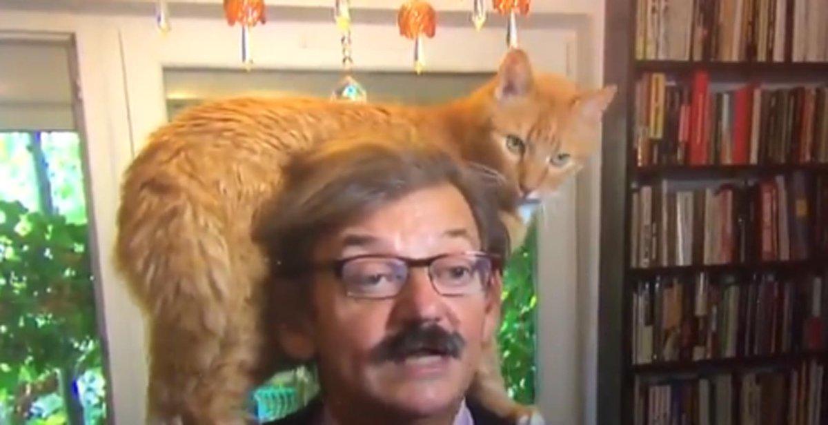 Gato 'rouba a cena' durante entrevista ao vivo em TV holandesa https://t.co/obiFLzjmlo #PlanetaBizarro #G1