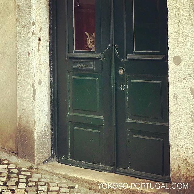 test ツイッターメディア - お留守番しているアルファマのネコ。 #リスボン #ポルトガル https://t.co/h0dD8bm0im