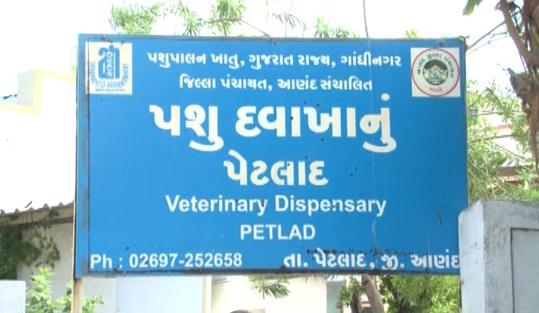 Petlad vet clinic becomes first in Gujarat to have anesthesia machine