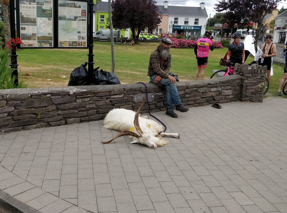 Delighted to see my #goat friend from #ROKCharityCycle 2017 is still loving life! 🙄