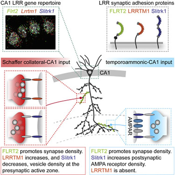 Neuronal Barcodes Shape Complex Networks In The Brain >> Michael Scranton Mwe Michael Twitter