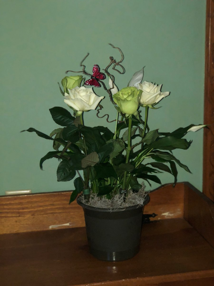 Kathys Creations On Twitter Happy Birthday Peace Lily With Roses