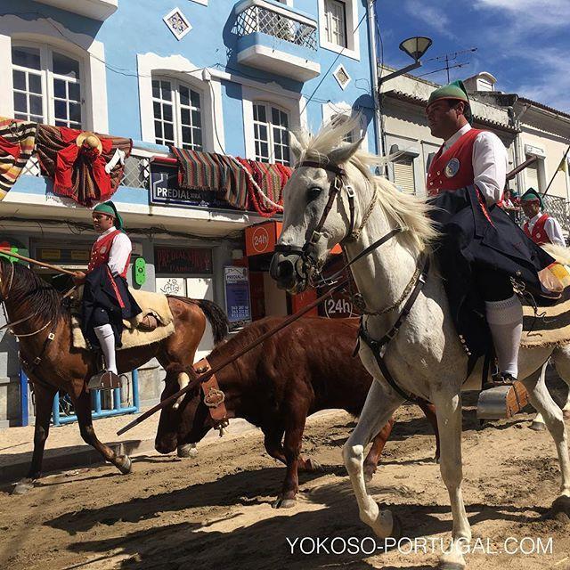 test ツイッターメディア - リスボン郊外の街、Vila franca de Xiraで毎年6月第1週末に行われる、赤いチョッキの牛追い祭り。パレードの後、この闘牛が砂を敷き詰めた道路に放たれます。牛追いは誰でも参加可能です。今年は本日まで開催中です。 #牛追い祭り #ポルトガル https://t.co/2Nl4S7CWLt