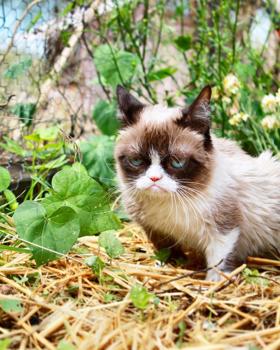 Grumpy Cat (@RealGrumpyCat) on Twitter photo 2018-07-09 17:57:51