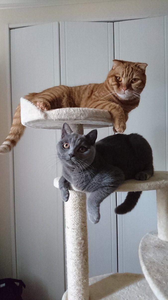 双猫見参!