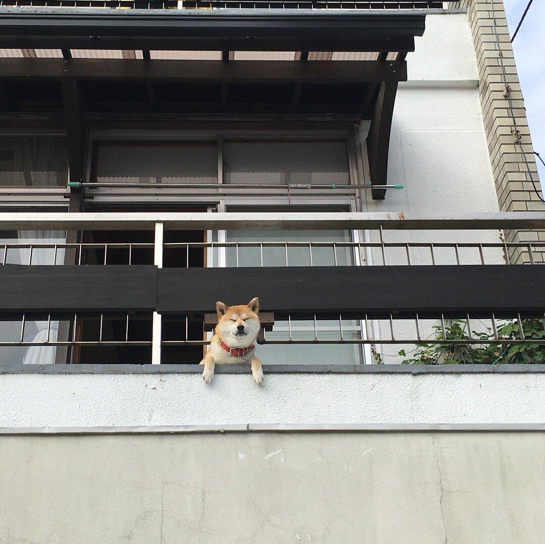 下田で会った犬。