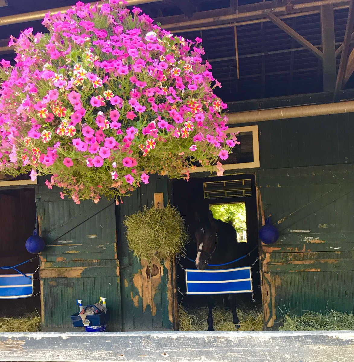 Brian lynch racing stable on twitter you know the saratoga meet is 531 am 9 jul 2018 from saratoga springs ny mightylinksfo