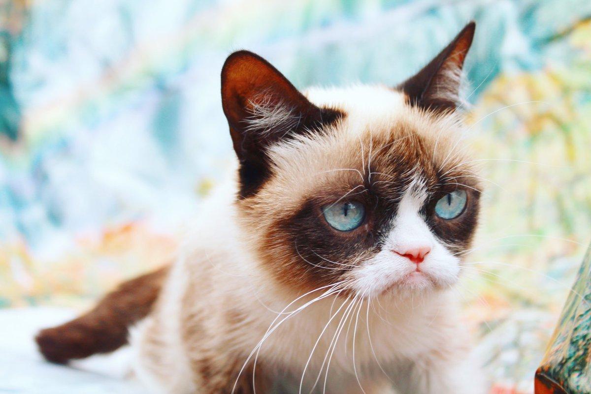 Grumpy Cat (@RealGrumpyCat) on Twitter photo 2018-07-10 04:54:47