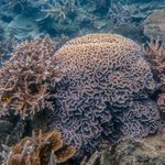 Image for the Tweet beginning: Fantastic #coral images from our