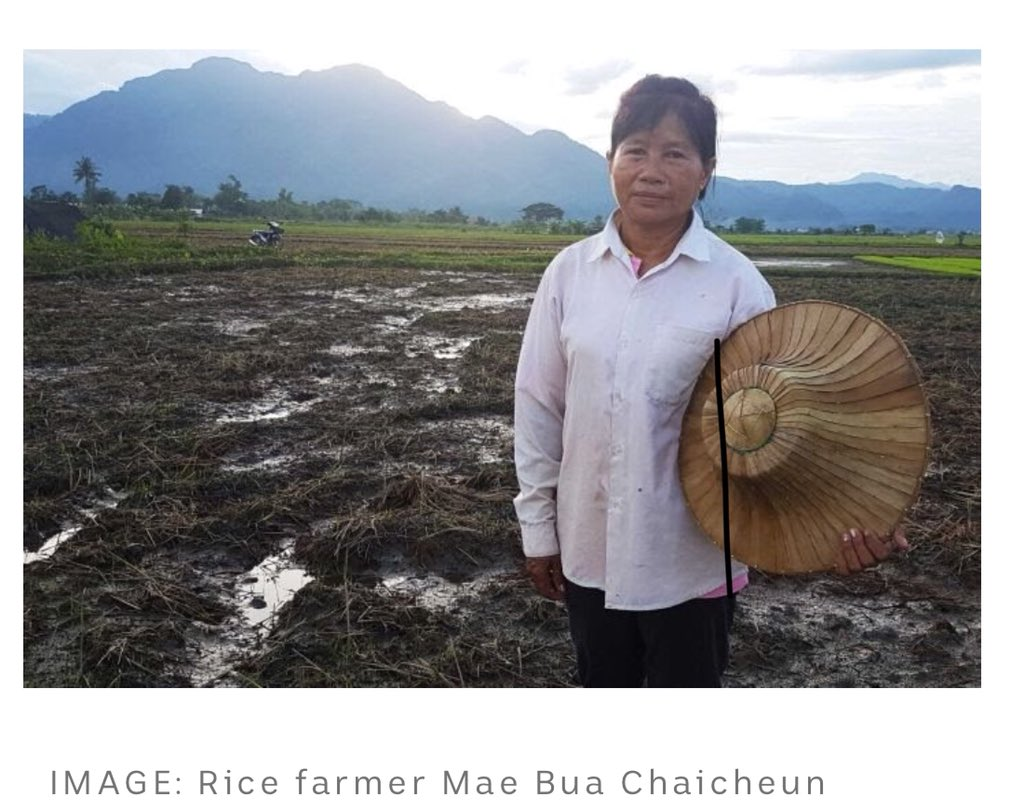 """Mae Bua Chaicheun is a rice farmer. Her rice paddies were destroyed by the 130million liters of water pumped from the cave in the rescue mission. Her response:""""Children are more important than rice. We can regrow rice but we can't regrow the children."""" #caverescue #ThaiCaveRescue https://t.co/wR7OauqyIf"""