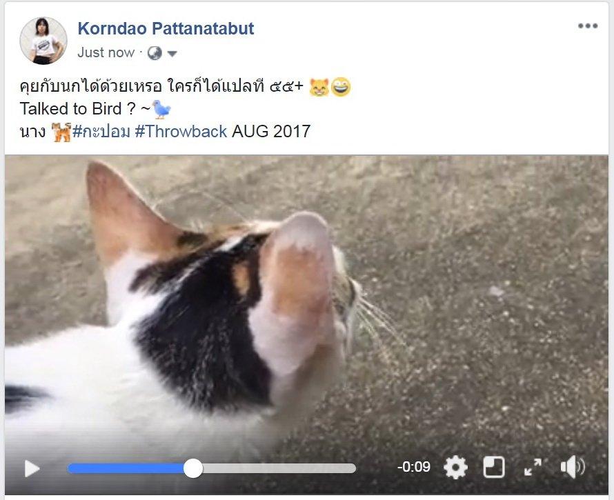 คุยกับนกได้ด้วยเหรอ ใครก็ได้แปลที ๕๕+ 😸🤪 #Cat Talked to #Bird ? ~🐦 นาง 🐅#กะปอม #Throwback AUG 2017 Clip: https://www.facebook.com/kornda0/posts/10216369496207846…