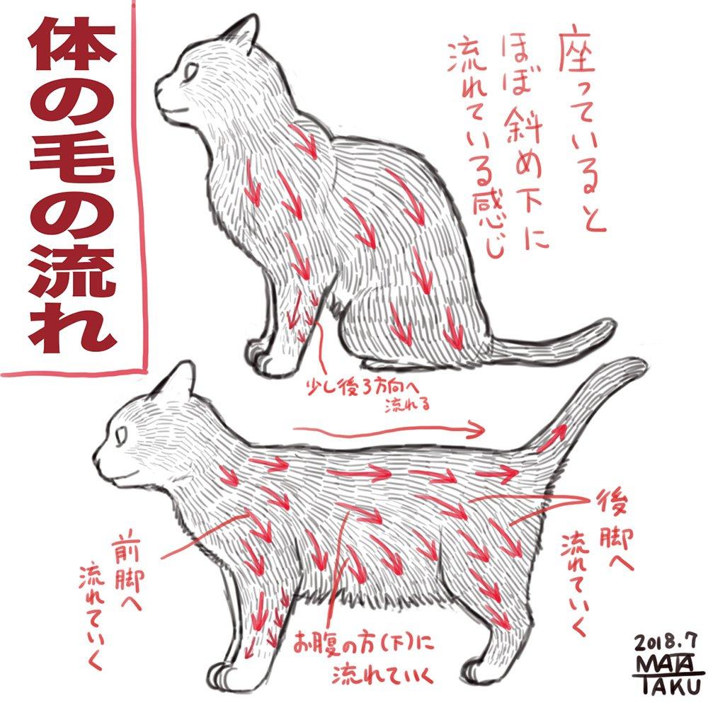 猫の毛の流れについてまとめてみました これは自己流の観察によるものなのでその辺はご了承ください