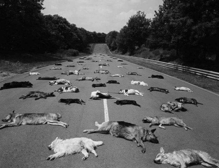 Le photographe Manuel Litran a fait déposer sur le circuit de Magny-Cours les 140 chiens abandonnés en seulement deux jours que la SPA a dû euthanasier. Tout est vrai, pas de montage numérique. La scène est révoltante parce qu'elle se reproduit chaque été.  #nonàlabandon