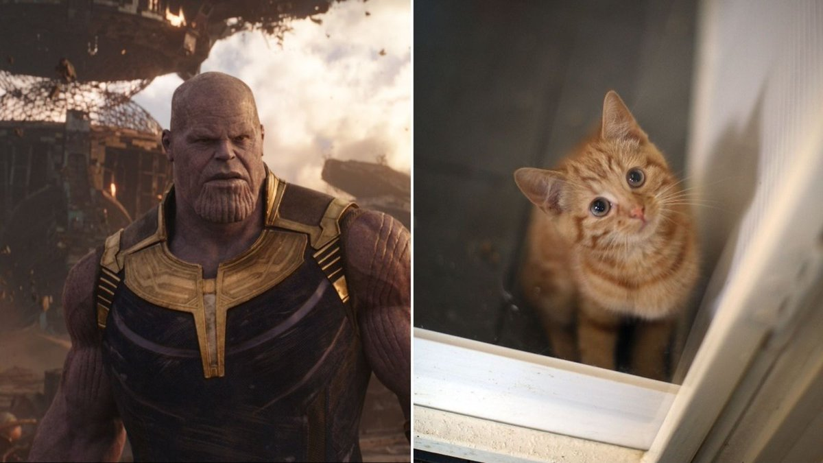 Yes, Thanos also killed half of all puppies and kittens in Avengers: #InfinityWar https://t.co/KQZuic5mmf