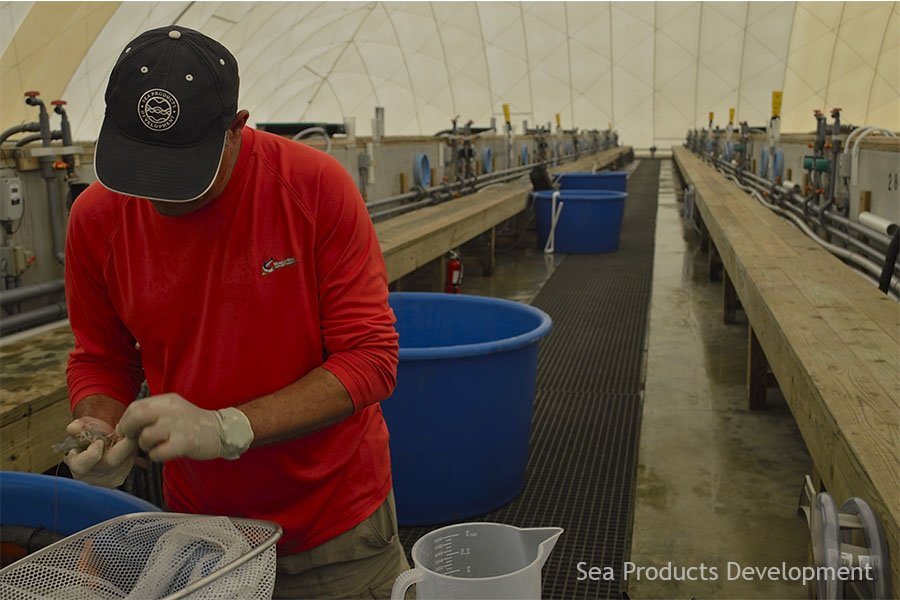 System Analysis and Modeling: Theory and