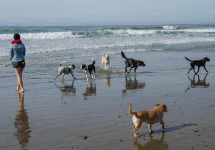 Morro Bay Dog Friendly Things To Do
