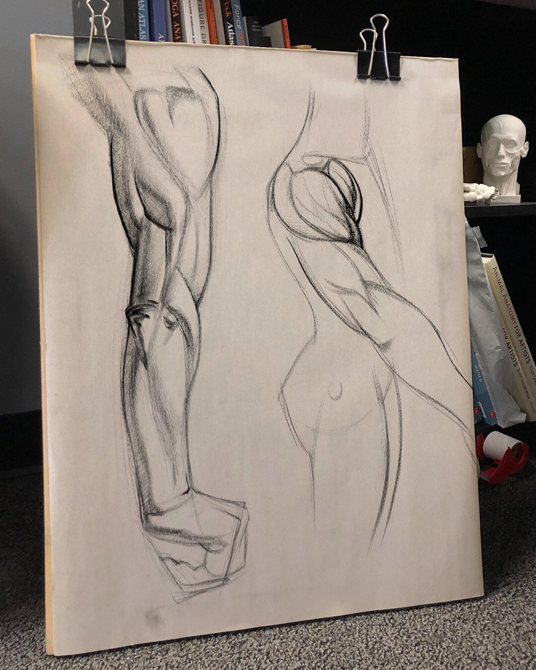 Stan Prokopenko On Twitter Triceps And Deltoid Charcoal Sketches