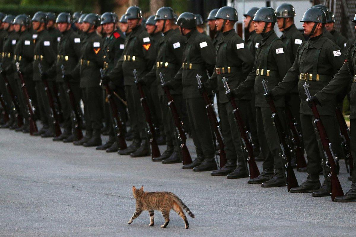 Gato 'passa tropa em revista' em Chipre https://t.co/3kh7K88BwP #PlanetaBizarro #G1