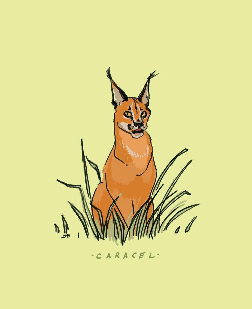 caracel hashtag on Twitter