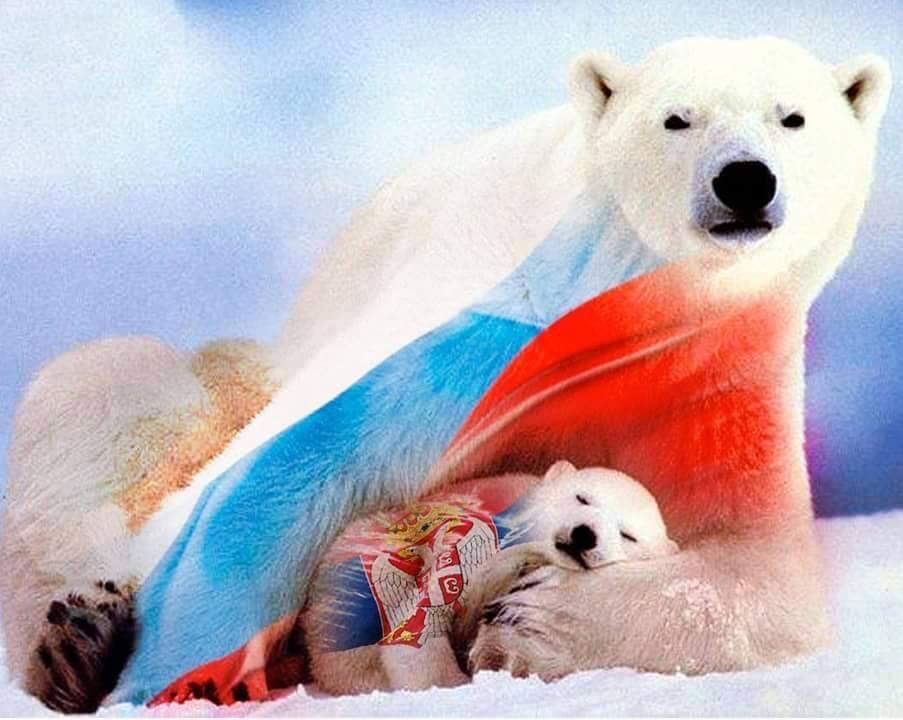 комментариях картинка белый медведь с флагом россии стал одержим