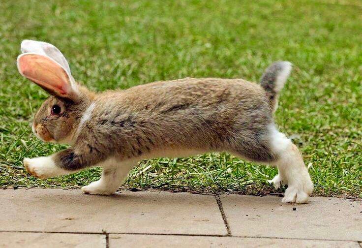 Смешные фото с зайцами