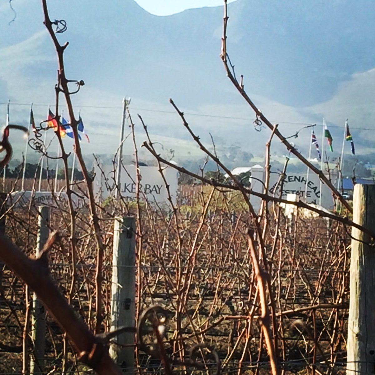 Vines waiting to be pruned....soon #walkerbay <br>http://pic.twitter.com/8tFRmfomB6