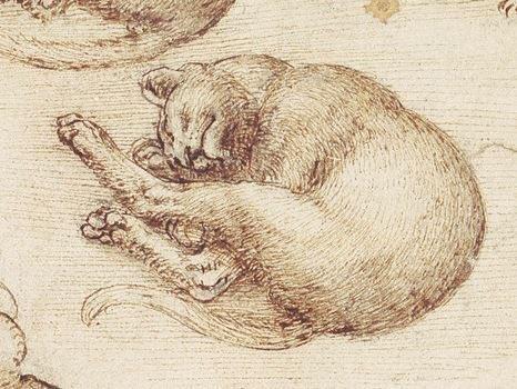 レオナルド・ダ・ヴィンチは幾つかの猫のスケッチと共に「猫科の一番小さな動物、つまり猫は最高傑作である」という言葉を残しているそうだ。