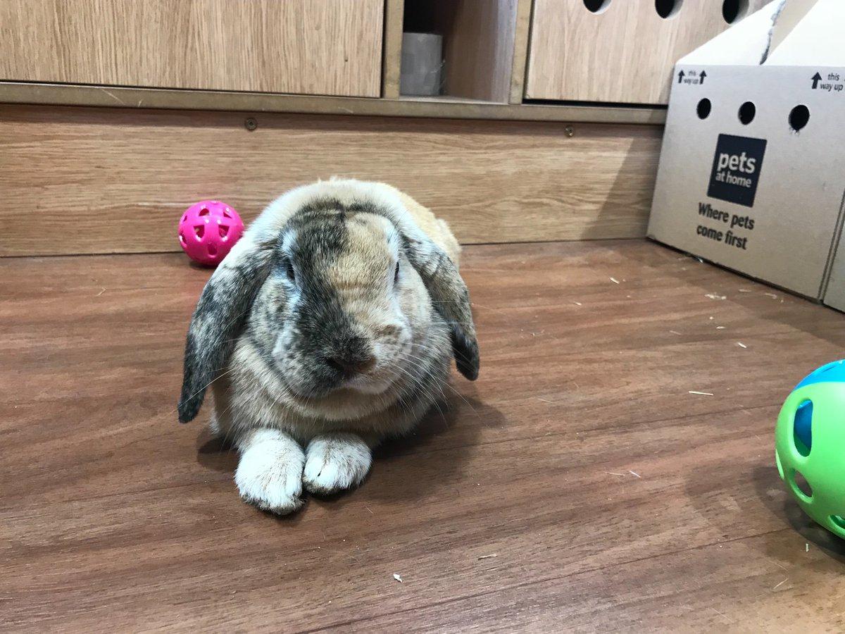 Pets At Home Leigh Petsleigh Twitter