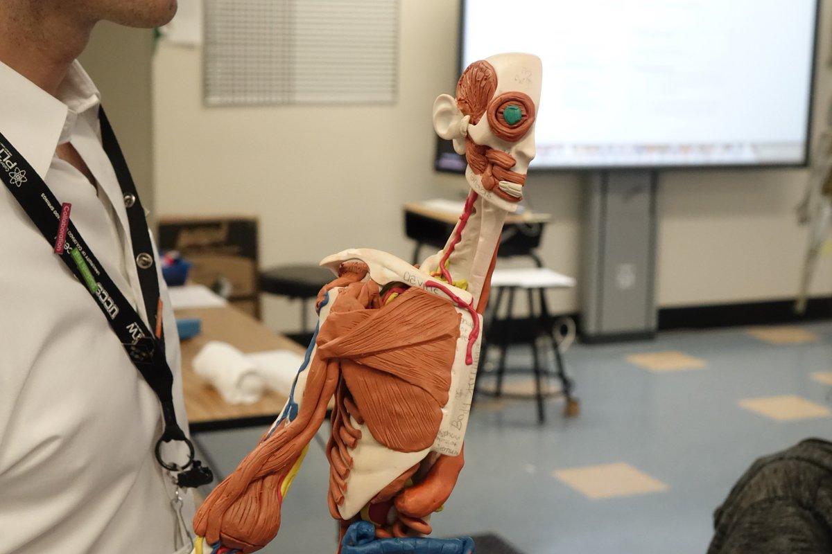 Anatomy In Clay (@AnatomyinClay)   Twitter